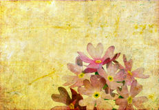Floral background image Stock Photography
