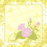 Floral background, Ipomoea Stock Images