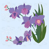 Floral background with iris. Stock Photos