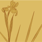 Floral background with Iris flower. Sepia illustration Stock Images