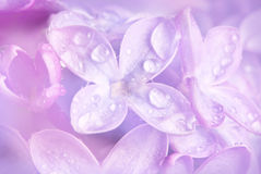 Floral background - lilac. Floral background with a dewy lilac Royalty Free Stock Photo