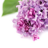 Floral background lilac flowers Stock Photography
