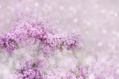 Floral background of lilac flowers Stock Photo