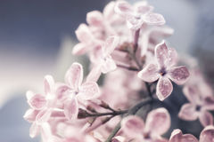 Floral background with lilac flowers Stock Photography