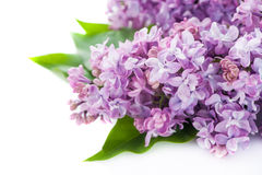 Floral background lilac flowers Stock Images