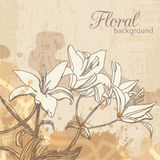 Floral background with lilies Stock Images