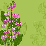 Floral background with Lilium martagon flower Stock Images