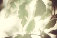 Floral background with macro delicate green leaves of plant abstract picture. Floral blurred background with macro delicate green leaves of plant abstract royalty free stock photography