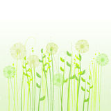 Floral background, meadow Stock Photography