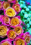 Floral background of orange roses stock photo