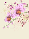 Floral background with orchid and ornament. Hand drawn  floral background with orchid and ornament Stock Images