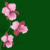 Floral background with orchid Royalty Free Stock Photography