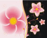 Floral background8 Royalty Free Stock Images