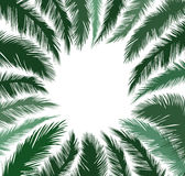 Floral background. Palm leaves flourish border. Nature frame Stock Photography