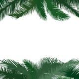 Floral background. Palm leaves flourish border. Nature frame Stock Photo