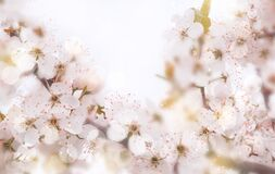 Floral background in pastel colors. Romantic spring soft background. unfocused, strongly blurred