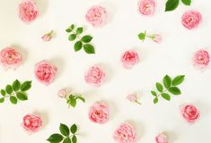 Floral pattern of pale pink roses flower buds and leaves stock images