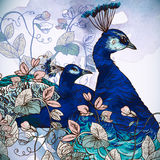 Floral Background with Peacock Royalty Free Stock Photos