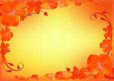 Floral background- Pelargonium Royalty Free Stock Image