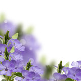 Floral background from periwinkle Stock Photos