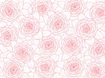 Floral background of pink camellias on a white background Stock Images