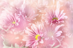 Floral background, pink flowers Stock Photos