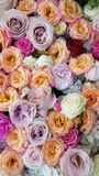 Floral background. Pink flowers. Floral carpet. Floral pattern. white roses. Floral background. Flowers of different colors. Floral carpet. Floral pattern royalty free stock images