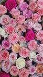 Floral background. Pink flowers. Floral carpet. Floral pattern. white roses. Floral background. Flowers of different colors. Floral carpet. Floral pattern stock photos