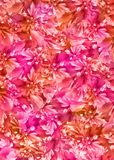 Floral_background_pink_orange Stock Photography