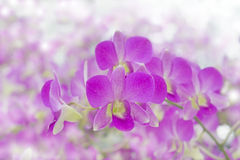 Floral background with pink orchids Royalty Free Stock Photography