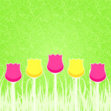Floral Background with Pink and Yellow Tulips Royalty Free Stock Photos