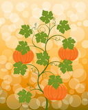 Floral background with a pumpkin Stock Image