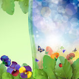 Floral background,rainbow. Colorful pansies flowers in the meadow Stock Photography