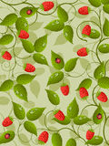 Floral background with raspberry Royalty Free Stock Photos