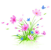 Floral background with red cosmos flowers Stock Photos