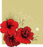 Floral background with red hibiscus Royalty Free Stock Photo