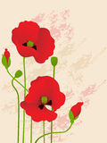 Floral background with red poppies Royalty Free Stock Image
