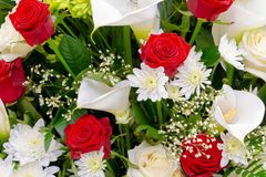 Floral background, red and white flowers closeup. Beautiful floral background, red and white flowers closeup. White Chrysanthemum, Red Rose, Gypsophila and stock images