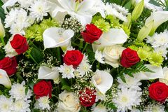 Floral background, red and white flowers closeup. Beautiful floral background, red and white flowers closeup. White and green chrysanthemum, red rose, lily, Gyps stock photo