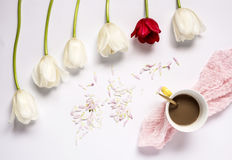 Floral background with red and white tulips and coffee Royalty Free Stock Image