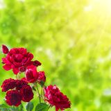Floral background with rose Royalty Free Stock Images