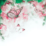 Floral background of roses Royalty Free Stock Images