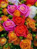 Floral background of roses Royalty Free Stock Photography