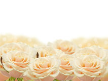 Floral background from roses Royalty Free Stock Image