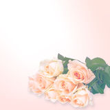 Floral background: roses isolated over  white background Stock Images