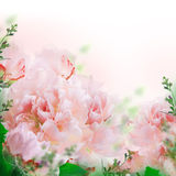 Floral background of roses and lilies Royalty Free Stock Photos