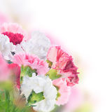 Floral background of roses and lilies Royalty Free Stock Image