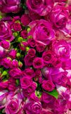 Floral background of roses Stock Photos