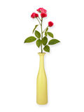 Floral background: roses in a vase isolated on white background. Copy space Stock Images