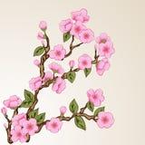 Floral background with sakura Stock Photos
